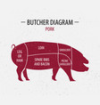 cut of pork poster butcher diagram vector image vector image