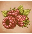 engraving raspberry retro vector image