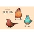 Exotic birds Hand vector image