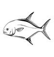permit fish vector image