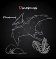 pterosaur with plant and stone on chalk vector image vector image