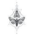 black and white moths over vector image vector image
