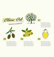 infographic get olive oil pictures for four steps vector image vector image
