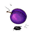plum drawing hand drawn isolated fruit vector image vector image