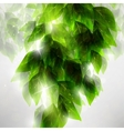 Beautiful green leaves vector image