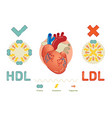 what is lipoprotein - explanation vector image vector image