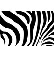 abstract background skin of a zebra white and vector image vector image
