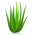 Aloe-vera Element for design vector image vector image