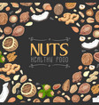 background with colored nuts and seeds vector image vector image