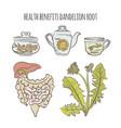 dandelion benefits medical pharmacy vector image vector image