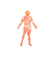 Gross Anatomy Male Isolated Low Polygon vector image
