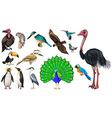 Set of vareties of wild birds vector image