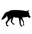black silhouette of wolf on white background of vector image