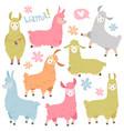cute llama set ballamas alpaca wild lama vector image vector image
