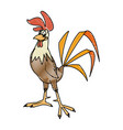 rooster bird farm domestic male image vector image
