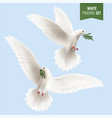 white dove realistic set vector image
