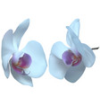 white orchid flowers isolated on white vector image vector image