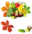 autumn fruit and leaves - vector image vector image