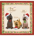 Cairnterrier Card vector image vector image