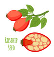 rosehip seeds haw cartoon flat style vector image vector image