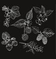 sketch of berries set of vector image