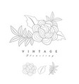 stylized vintage retro flower natural style brand vector image vector image