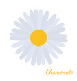 daisy chamomile herbal cosmetics plant vector image