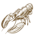 engraving lobster vector image vector image