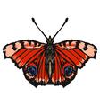 european peacock butterfl vector image vector image