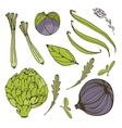 Colorful set of fresh handdrawn vegetables vector image
