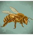 engraving honey bee retro vector image vector image