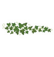 ivy branch icon greenery decoration and plant vector image vector image