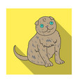 scottish fold icon in flat style isolated on white vector image vector image