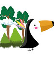 cute bird toucan in the landscape vector image