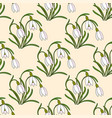 modern with gentle snowdrops vector image