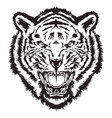 angry tiger head black and white vector image