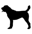 central asian shepherd dog vector image vector image