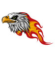 eagle head with flames design vector image vector image