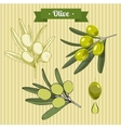 Set of green olives 2 vector image vector image