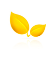 Yellow leaves on white background vector image vector image