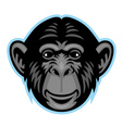 chimp head vector image vector image