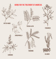 best herbal remedies for anorexia vector image vector image