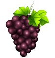 Fresh grapes on white background vector image