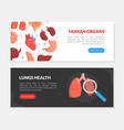 human organs lungs health landing page templates vector image vector image