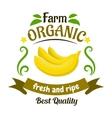 Organic farm banana fruits retro badge design vector image vector image