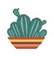 home cactus icon vector image