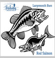 largemouth bass and red salmon - fishing on usa vector image vector image
