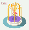 parrot in cage isometric composition vector image