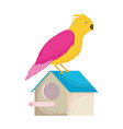 pet shop bird in house cartoon isolated white vector image vector image