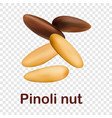 pinoli nut icon realistic style vector image